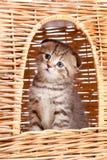 Funny little kitten sitting inside cat house Stock Photography