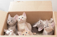 Funny little kittens in a box Stock Image