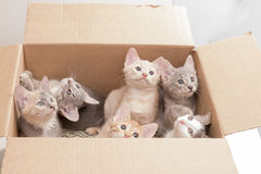 Funny little kittens in a box Royalty Free Stock Photography