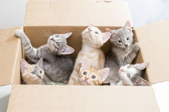 Funny little kittens in a box Stock Photos