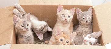 Funny little kittens in a box Royalty Free Stock Photos