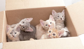 Funny little kittens in a box Stock Photo