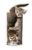 Funny little kittens Royalty Free Stock Images