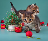 Funny little kittens with handmade Christmas tree and balls Royalty Free Stock Photos