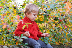 Funny little preschool boy sitting on a wall in late summer even Stock Image