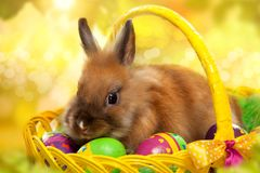 Funny little rabbit among Easter eggs in basket. Greeting card with bunny Stock Images