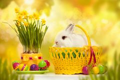 Funny little rabbit among Easter eggs in basket. Greeting card with bunny Stock Image