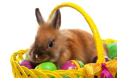 Funny little rabbit among Easter eggs in basket. Greeting card with bunny. Isolated on white background Stock Image