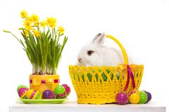 Funny little rabbit among Easter eggs in basket. Greeting card with bunny. Isolated on white background Stock Photo
