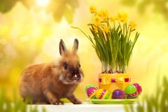 Funny little rabbit with easter eggs. Greeting card. Spring bunny Royalty Free Stock Photos