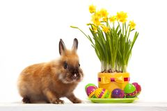Funny little rabbit with easter eggs. Greeting card. Spring bunny. Isolated on white background Stock Images