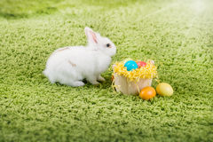 Funny little rabbit and Easter eggs Stock Photography
