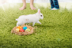 Funny little rabbit and Easter eggs Royalty Free Stock Images