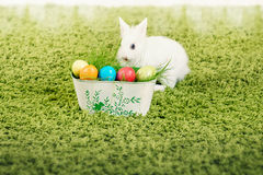 Funny little rabbit and Easter eggs Stock Image