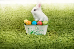 Funny little rabbit and Easter eggs Royalty Free Stock Photo