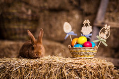 Funny little rabbit among Easter eggs in velour grass,rabbits wi Royalty Free Stock Photography