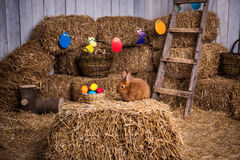 Funny little rabbit among Easter eggs in velour grass,rabbits wi Royalty Free Stock Images