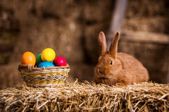 Funny little rabbit among Easter eggs in velour grass,rabbits wi Stock Images