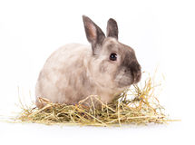 Funny little rabbit. Royalty Free Stock Photography