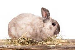 Funny little rabbit. Stock Photo
