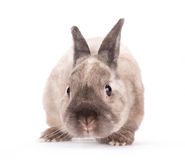Funny little rabbit. Funny little rabbit  on white background Stock Photos