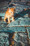 Funny little red kitten showing tongue. Cute pet walks on old road in Stari Bar, Montenegro. Stock Images
