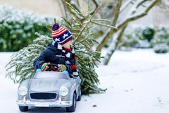 Funny little smiling kid boy driving toy car with Christmas tree. Happy child in winter fashion clothes bringing hewed. Xmas tree from snowy forest. Family stock photography