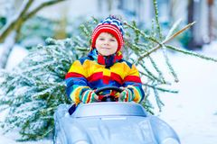 Funny little smiling kid boy driving toy car with Christmas tree. Royalty Free Stock Images