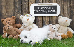 Funny little whelp  lying relaxed in grass with teddy bears and Stock Photos