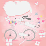 Funny little white puppy on Bicycle Stock Images
