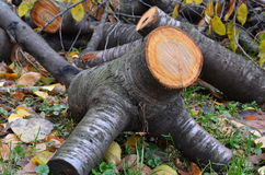 Funny log Royalty Free Stock Photo
