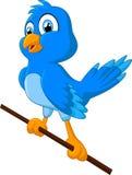Funny looking bird cartoon illustration Stock Photography
