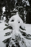 Funny looking tree beside Mount Seymour snowshoe trails Royalty Free Stock Image