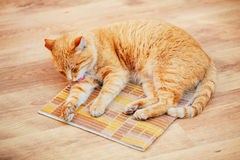 Funny Lovely Red Cat Kitten Lick Washes Itself at Home. Royalty Free Stock Image