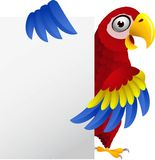 Funny macaw bird with blank sign Royalty Free Stock Image