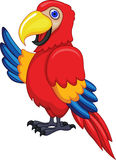 Funny macaw cartoon Stock Photo