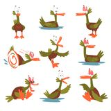Funny Male Mallard Duck Set, Comical Bird Cartoon Character in Different Situations Vector Illustration. On White Background royalty free illustration