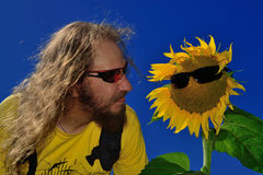 Funny man with beard and long hair looking at sunflower Stock Photo