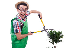 Funny man trimming plans Royalty Free Stock Photo