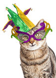 Funny Mardi Gras Cat. Funny photo of a happy cat wearing Mardi Gras mask and jester hat