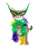 Funny Mardi Gras Party Cat. Funny cat in Mardi Gras party feather boa and mask royalty free stock photo