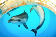 Funny marine dolphins Royalty Free Stock Image