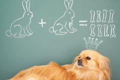 Funny mathematics Stock Photography