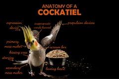 Funny Meme, anatomy of a parrot cockatiel, sarcastic funny bird memes