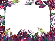 Funny and modern summer tropical background with exotic palm leaves. Free space for your text Stock Photo