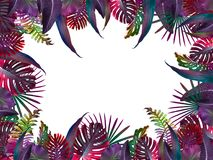 Funny and modern summer tropical background with exotic palm leaves Royalty Free Stock Photos