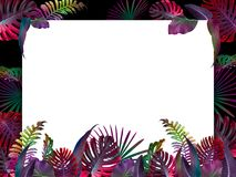 Funny and modern summer tropical background with exotic palm leaves. Free space for your text Royalty Free Stock Image