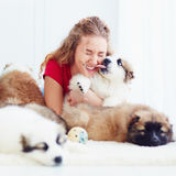 Funny moment of cute puppy licking laughing girl Royalty Free Stock Images