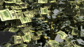 Funny money tree stock video