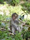 Funny monkey Stock Images